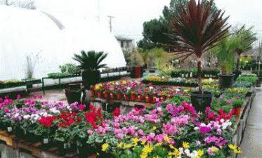 شگر محکمہ زراعت کے زیر انتظام پھولوں کی مارکیٹنگ کیلئے تربیتی ورکشاب