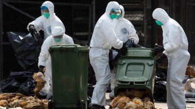 جاپان ،برڈفلو سے 60 لاکھ مرغیاں ہلاک